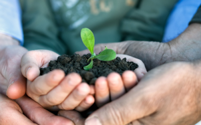 Companion Gardening May Help Some Issues In The Garden