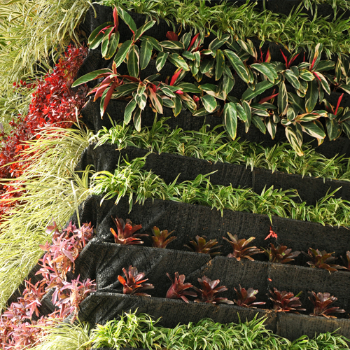 Onward and Upward with Vertical Gardening