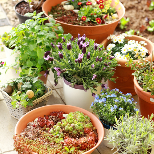 Tips for Successful Flower Container Gardening