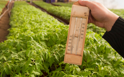 Soil temperature is critical to Vegetable garden success